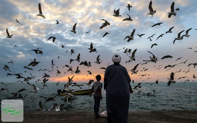 پرندگان-دریایی-در-سواحل-بوشهر