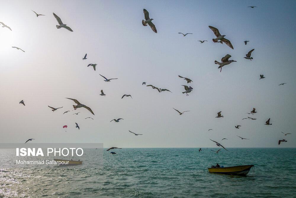خلیج-همیشه-«فارس»